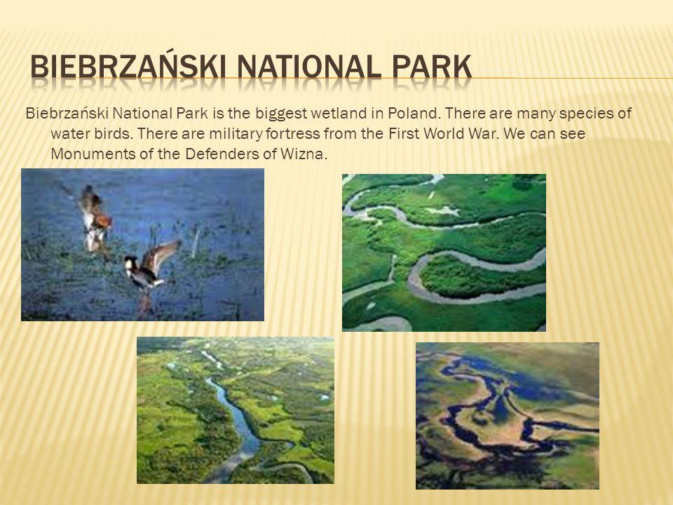Biebrzański National Park is the biggest wetland in Poland.