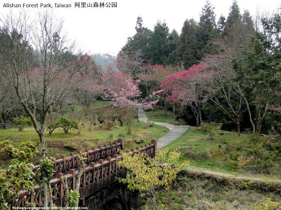Yushan National Park, Taiwan 玉山国家公园