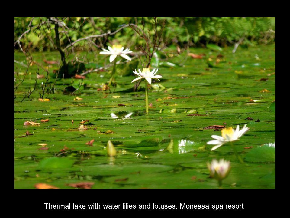 Bodi Lake, Mogosa. Near Baia Mare.