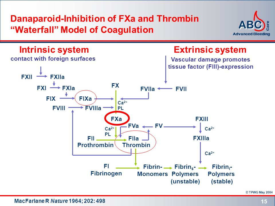 © TPWG May 2004 ABC Advanced Bleeding Care 15 Danaparoid-Inhibition of FXa and Thrombin Waterfall Model of Coagulation FIXa Thrombin FXa FXIIFXIIa FXIFXIa FIX FX FVIIaFVII Extrinsic system Vascular damage promotes tissue factor (FIII)-expression Intrinsic system contact with foreign surfaces FVIIIFVIIIa Ca 2+ PL Ca 2+ PL FIIFIIa FXIIIa FXIII Ca 2+ Prothrombin Fibrin- Monomers Fibrin s - Polymers (unstable) Fibrin i - Polymers (stable) FI Fibrinogen FVa FV MacFarlane R Nature 1964; 202: 498