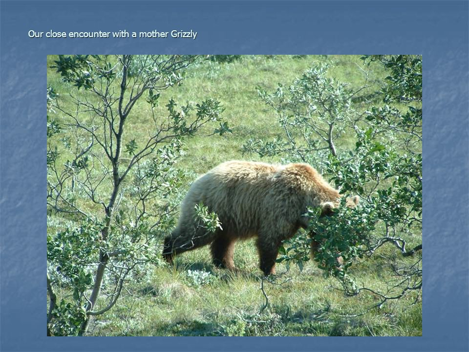 Our close encounter with a mother Grizzly