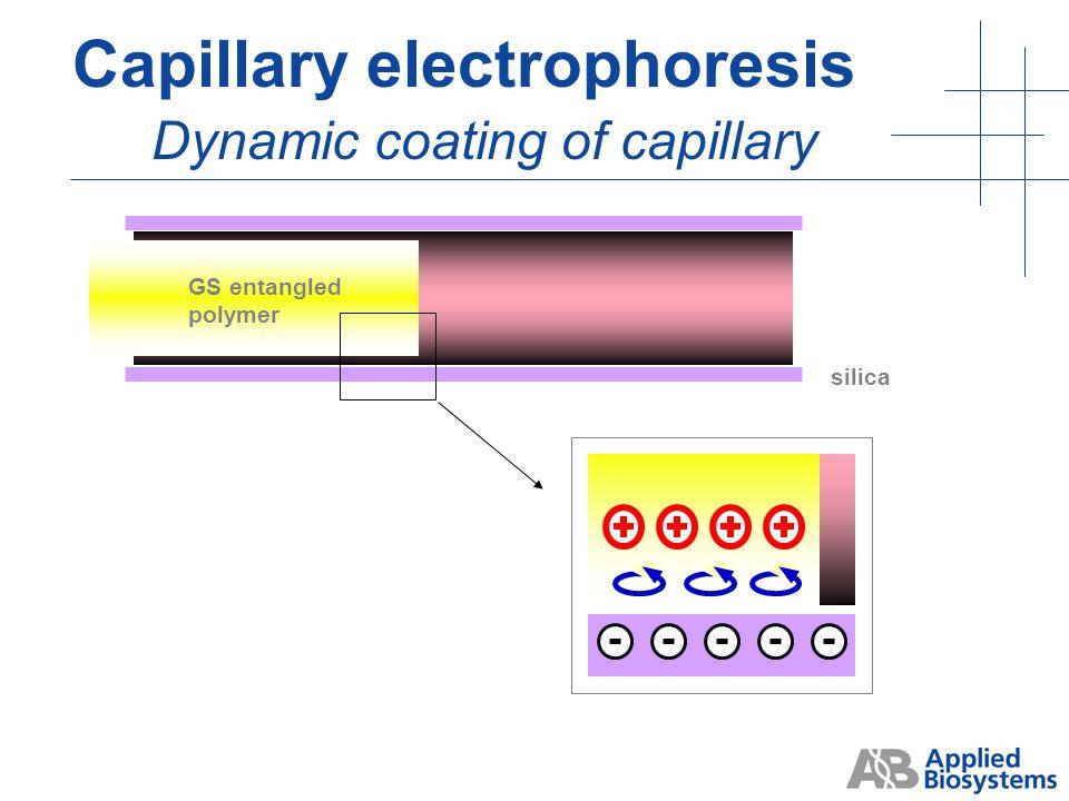 """gel"" flow DNA migration Capillary electrophoresis Electroendosmotic flow"