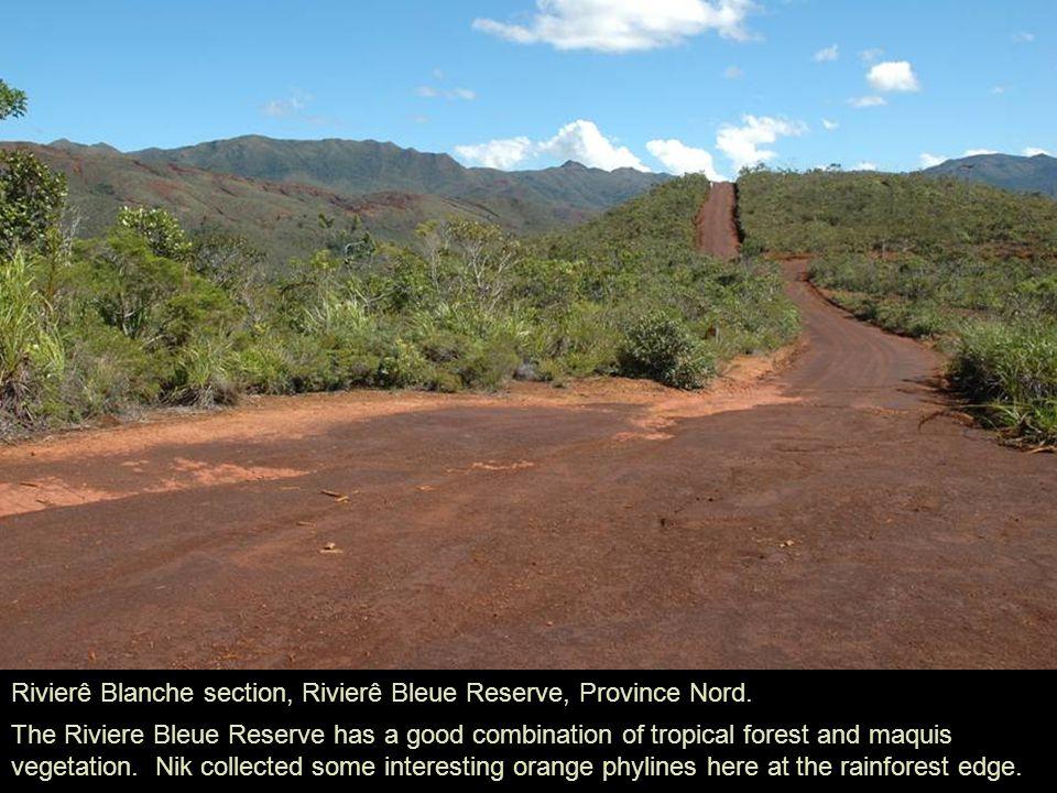 Rivierê Blanche section, Rivierê Bleue Reserve, Province Nord.