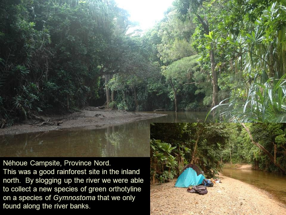 Néhoue Campsite, Province Nord. This was a good rainforest site in the inland north.