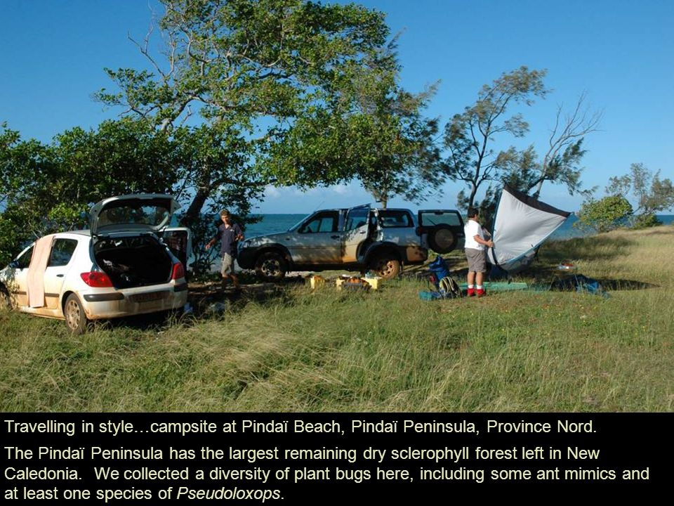 Travelling in style…campsite at Pindaï Beach, Pindaï Peninsula, Province Nord.