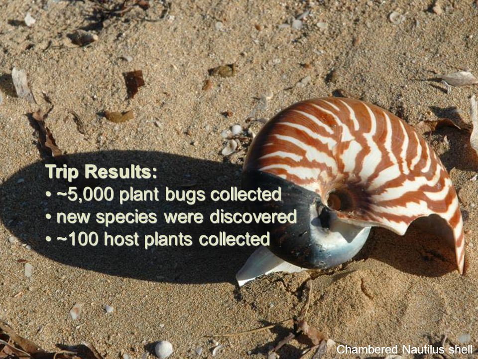 Chambered Nautilus shell Trip Results: ~5,000 plant bugs collected ~5,000 plant bugs collected new species were discovered new species were discovered ~100 host plants collected ~100 host plants collected