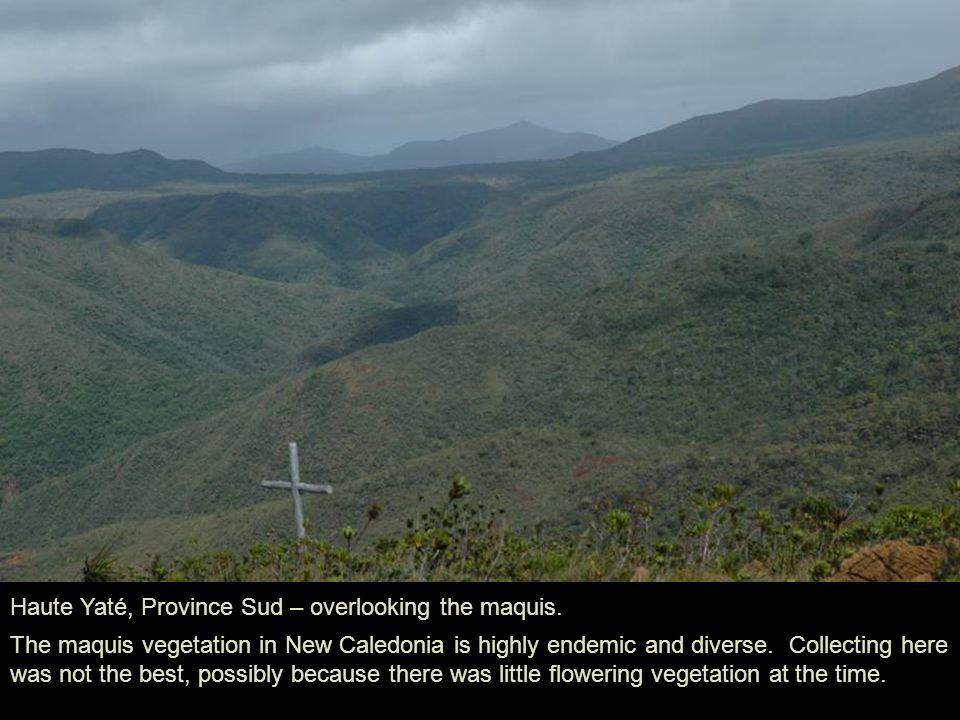 Haute Yaté, Province Sud – overlooking the maquis.