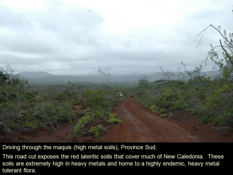 Driving through the maquis (high metal soils), Province Sud.