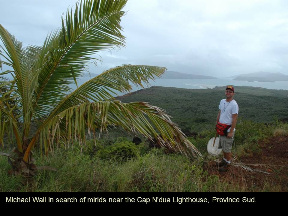 Michael Wall in search of mirids near the Cap N'dua Lighthouse, Province Sud.