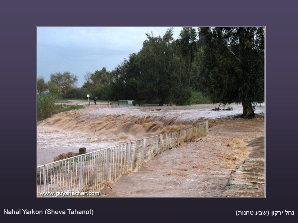 נחל ירקון (שבע טחנות) Nahal Yarkon (Sheva Tahanot)