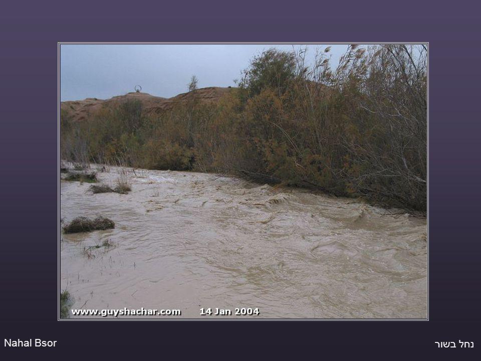 נחל בשור Nahal Bsor