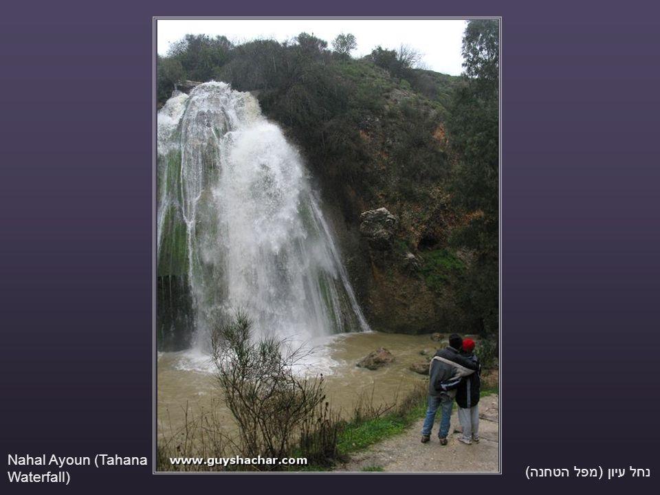 נחל עיון (מפל הטחנה) Nahal Ayoun (Tahana Waterfall)