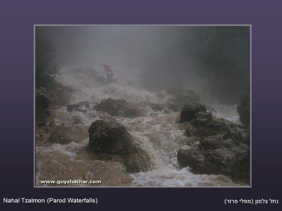 נחל צלמון (מפלי פרוד) Nahal Tzalmon (Parod Waterfalls)