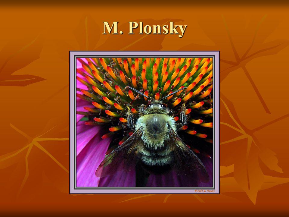 M. Plonsky