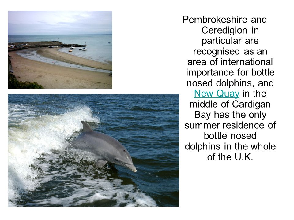 Pembrokeshire and Ceredigion in particular are recognised as an area of international importance for bottle nosed dolphins, and New Quay in the middle of Cardigan Bay has the only summer residence of bottle nosed dolphins in the whole of the U.K.