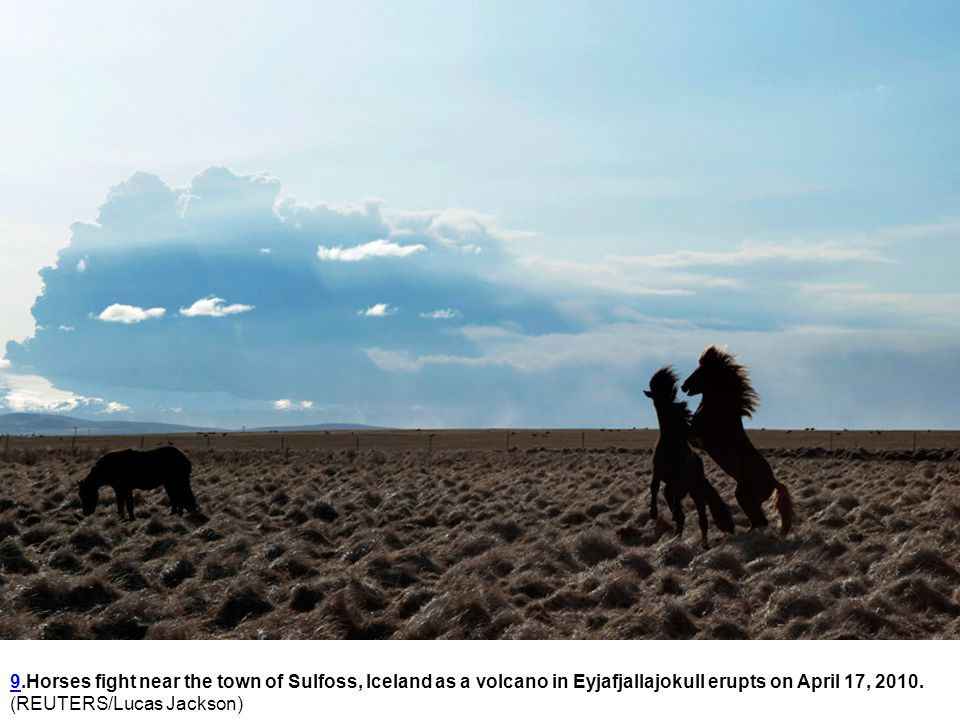 99.Horses fight near the town of Sulfoss, Iceland as a volcano in Eyjafjallajokull erupts on April 17, 2010.