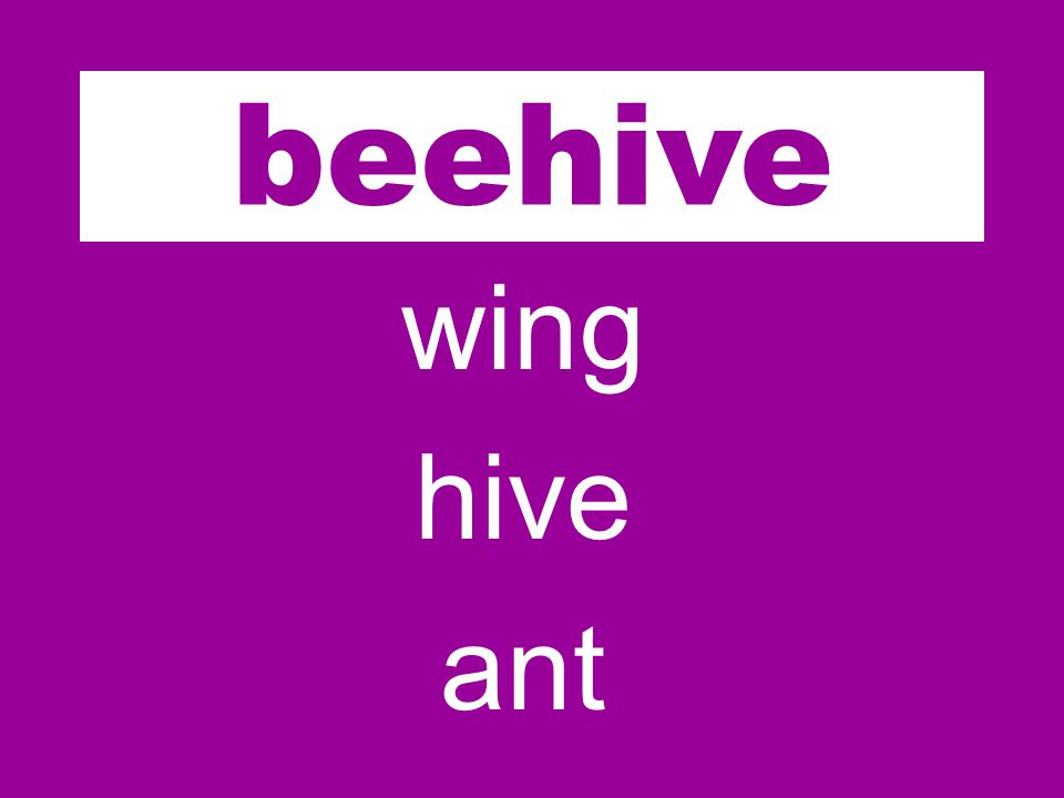 bee wing hive ant beehive