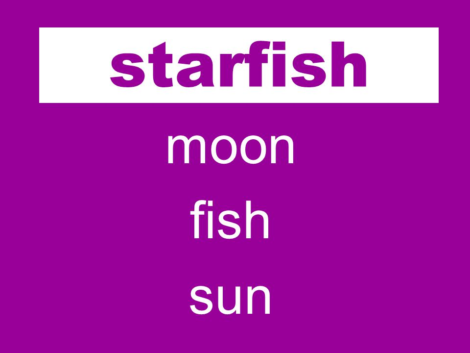 star moon fish sun starfish