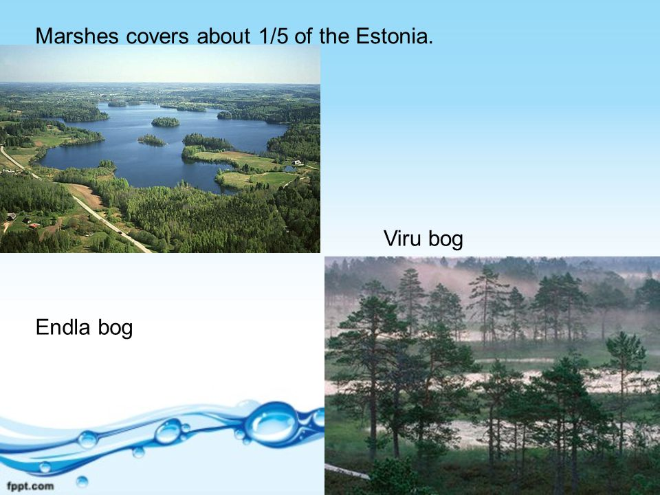 Marshes covers about 1/5 of the Estonia. Endla bog Viru bog