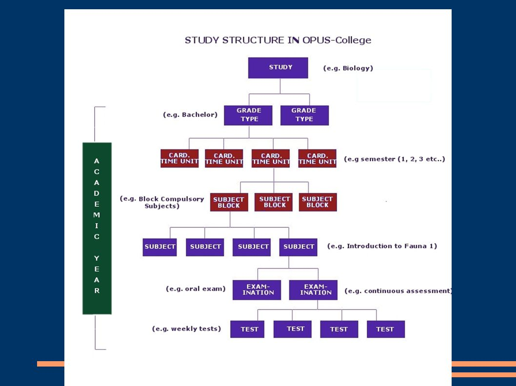 New features in OPUS-College Study Plan – changed concept: the study plan concept depicts the new student s view in the OPUS-College system on his/her study program.