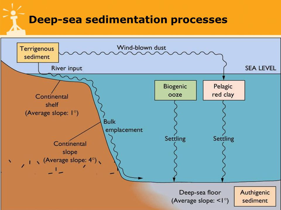 Deep-sea sedimentation processes