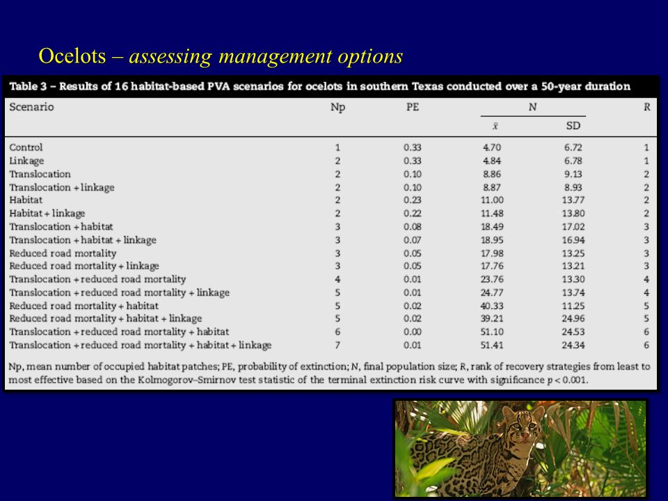 Ocelots – assessing management options