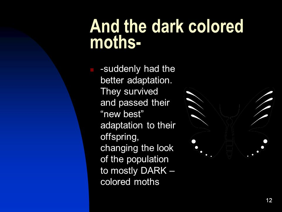 12 And the dark colored moths- -suddenly had the better adaptation.