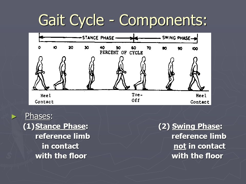 Gait Cycle - Components: ► Phases: (1)Stance Phase: (2) Swing Phase: reference limb in contact not in contact with the floor