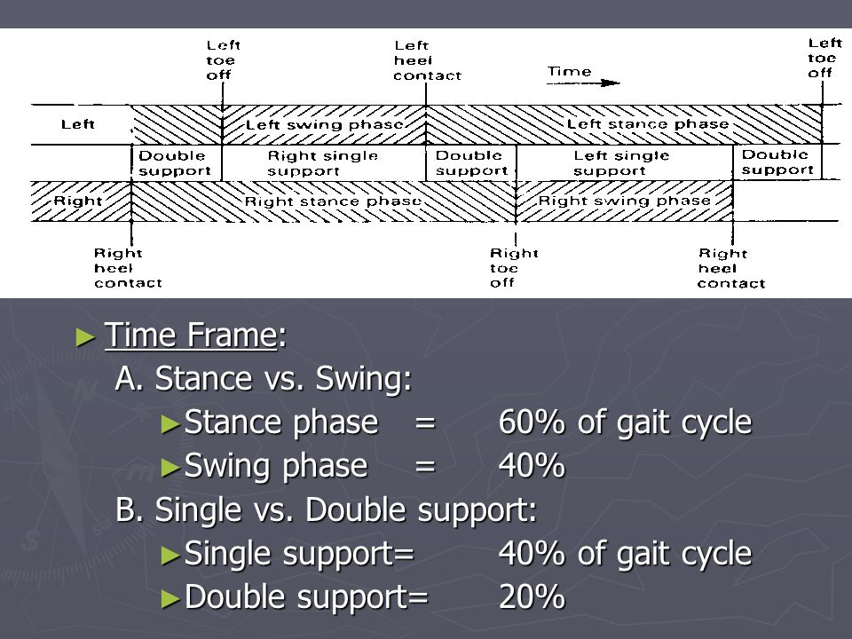 ► Time Frame: A.Stance vs. Swing: ► Stance phase= 60% of gait cycle ► Swing phase= 40% B.