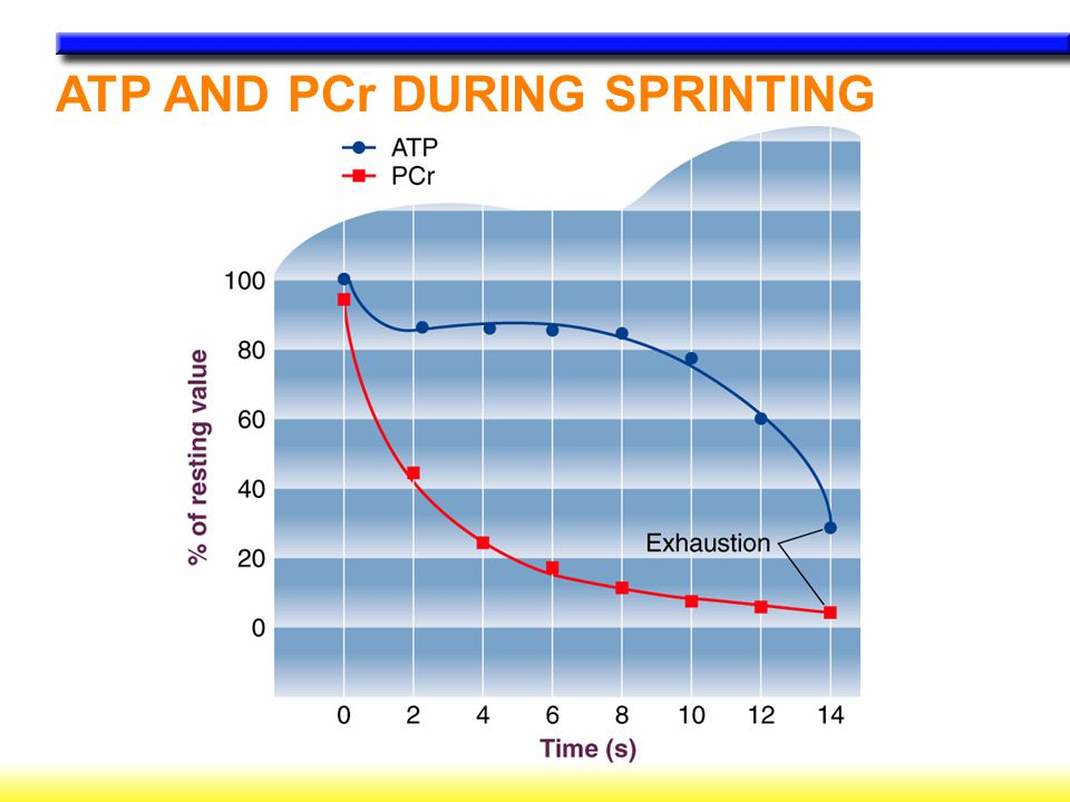 ATP AND PCr DURING SPRINTING