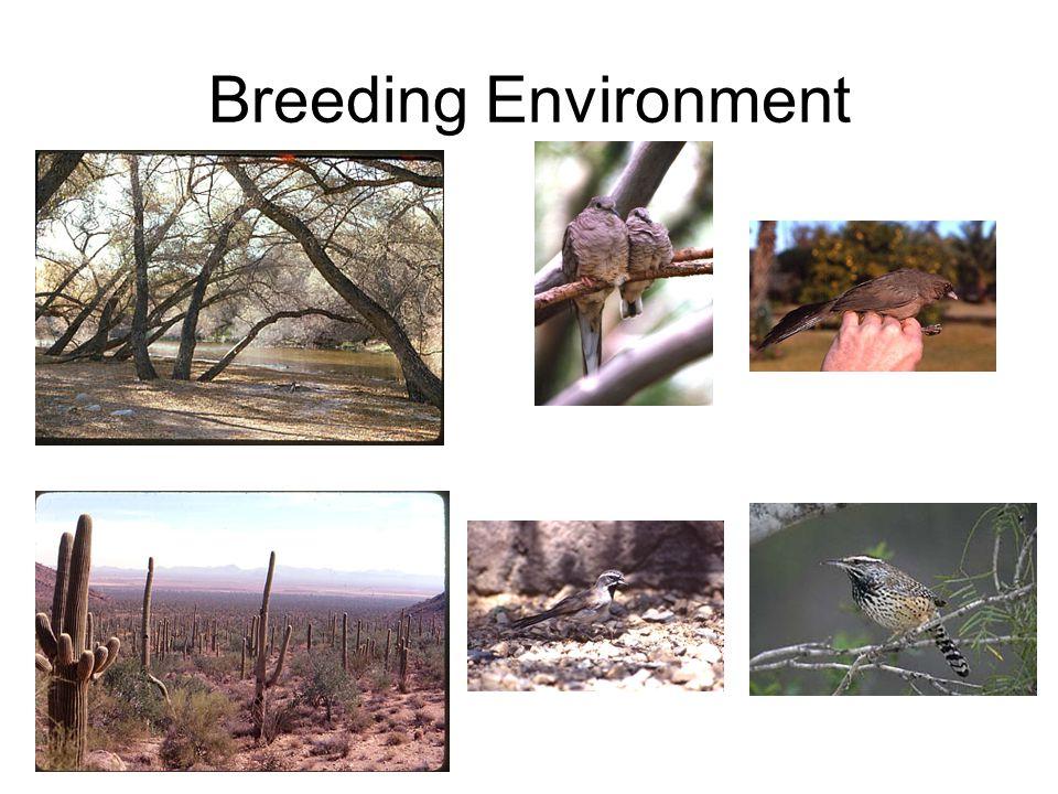 Breeding Environment