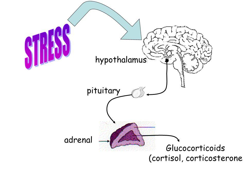 hypothalamus pituitary adrenal Glucocorticoids (cortisol, corticosterone
