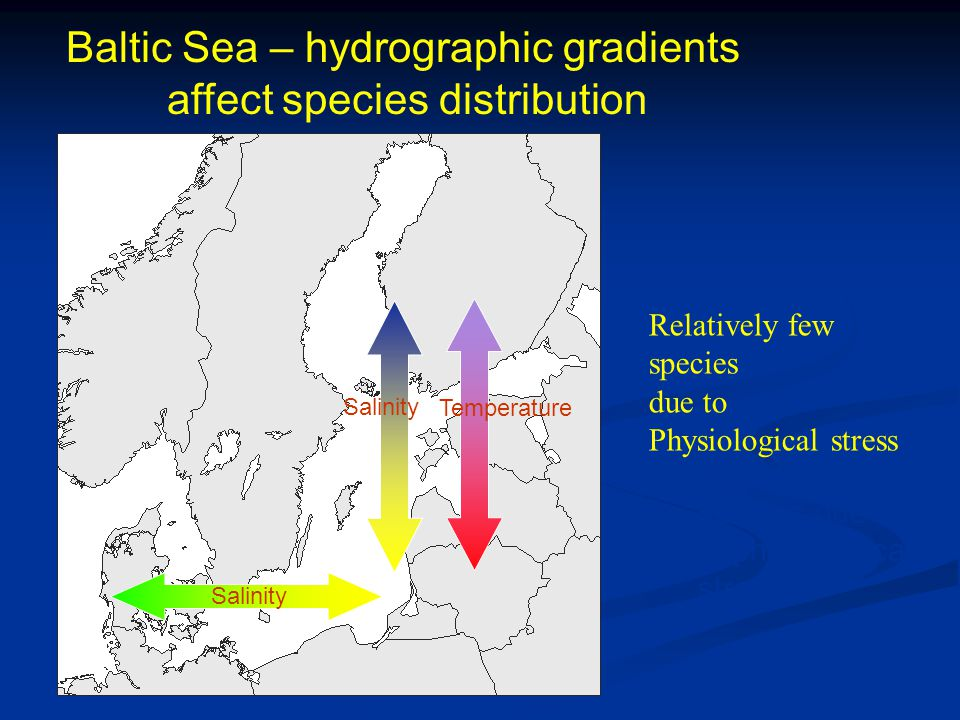 Baltic Sea – hydrographic gradients affect species distribution Salinity Temperature -relatively few species due to physiological stress Relatively few species due to Physiological stress