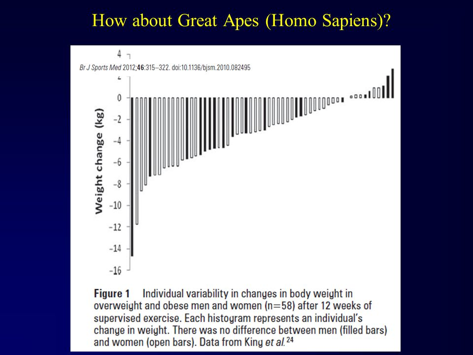 How about Great Apes (Homo Sapiens)?