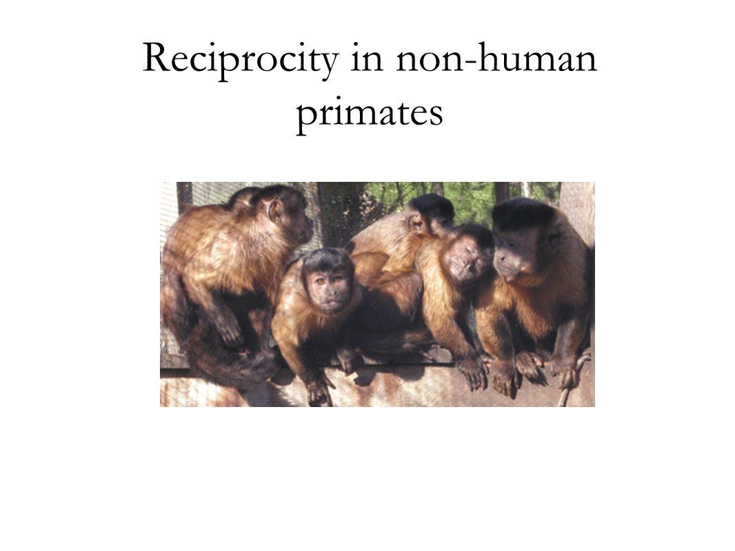 Reciprocity in non-human primates