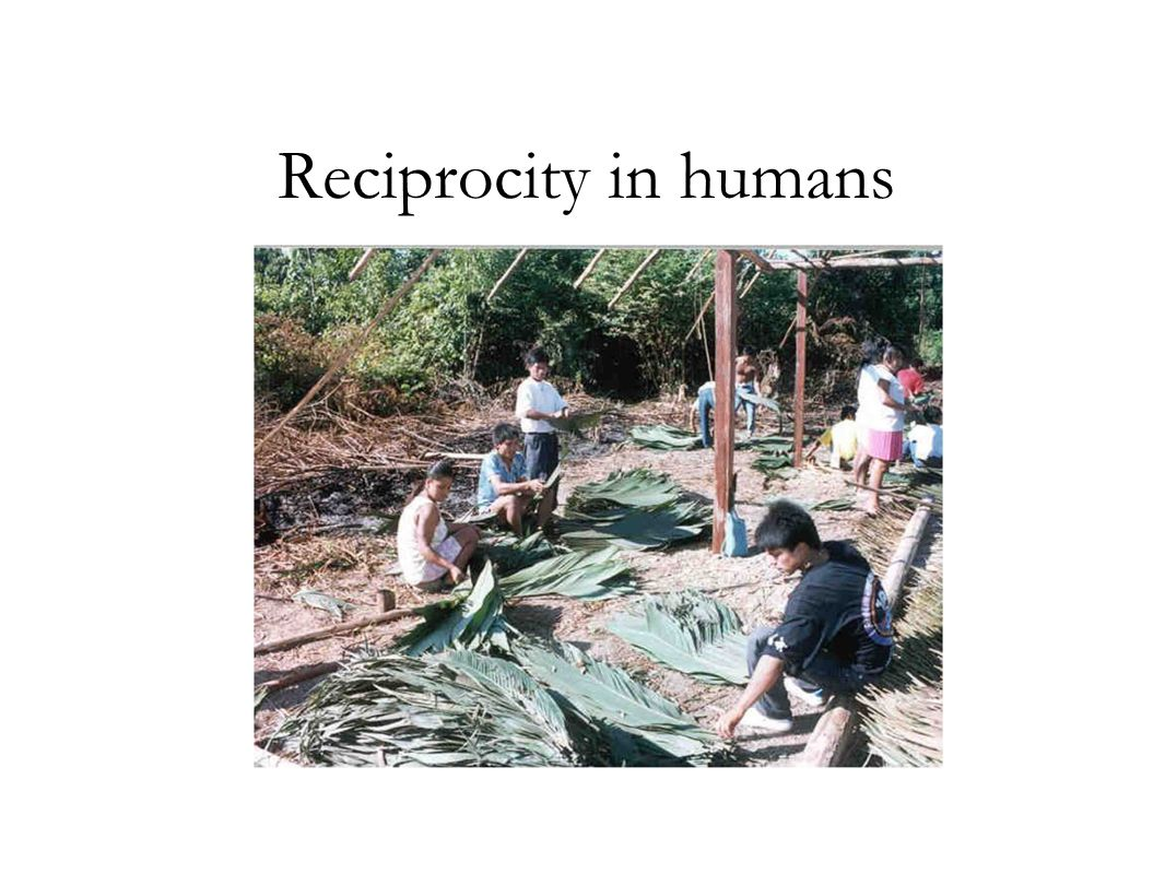 Reciprocity in humans