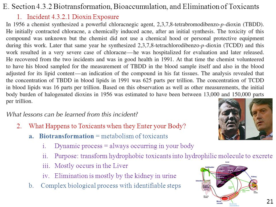 E. Section 4.3.2 Biotransformation, Bioaccumulation, and Elimination of Toxicants 1.Incident 4.3.2.1 Dioxin Exposure 2. What Happens to Toxicants when