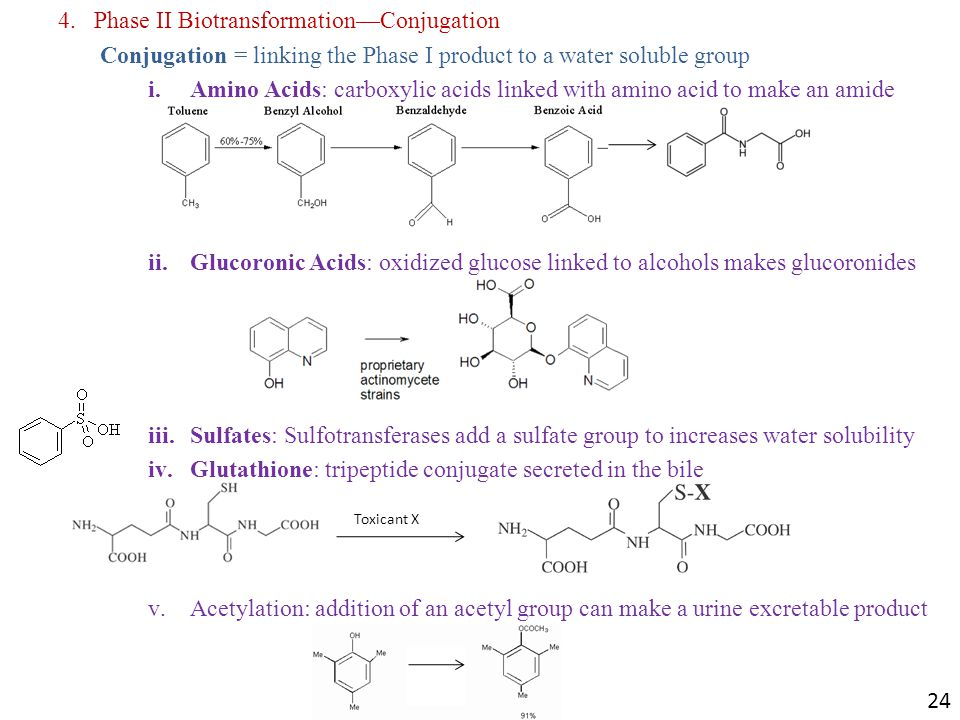 4.Phase II Biotransformation—Conjugation Conjugation = linking the Phase I product to a water soluble group i.Amino Acids: carboxylic acids linked with amino acid to make an amide ii.Glucoronic Acids: oxidized glucose linked to alcohols makes glucoronides iii.Sulfates: Sulfotransferases add a sulfate group to increases water solubility iv.Glutathione: tripeptide conjugate secreted in the bile v.Acetylation: addition of an acetyl group can make a urine excretable product Toxicant X 24
