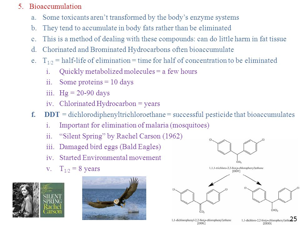 5.Bioaccumulation a.Some toxicants aren't transformed by the body's enzyme systems b.They tend to accumulate in body fats rather than be eliminated c.This is a method of dealing with these compounds: can do little harm in fat tissue d.Chorinated and Brominated Hydrocarbons often bioaccumulate e.T 1/2 = half-life of elimination = time for half of concentration to be eliminated i.Quickly metabolized molecules = a few hours ii.Some proteins = 10 days iii.Hg = 20-90 days iv.Chlorinated Hydrocarbon = years f.DDT = dichlorodiphenyltrichloroethane = successful pesticide that bioaccumulates i.Important for elimination of malaria (mosquitoes) ii. Silent Spring by Rachel Carson (1962) iii.Damaged bird eggs (Bald Eagles) iv.Started Environmental movement v.T 1/2 = 8 years 25