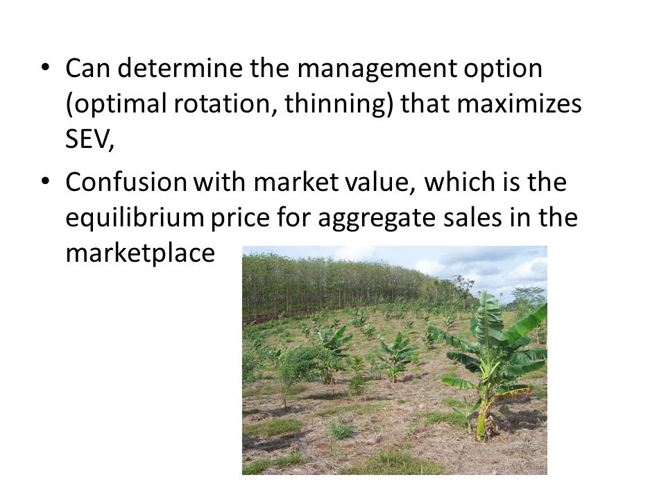 Can determine the management option (optimal rotation, thinning) that maximizes SEV, Confusion with market value, which is the equilibrium price for aggregate sales in the marketplace