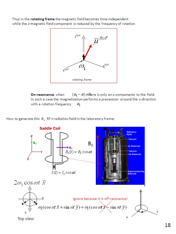 The return of the bulk magnetization to thermal equilibrium is governed by thermal motions.