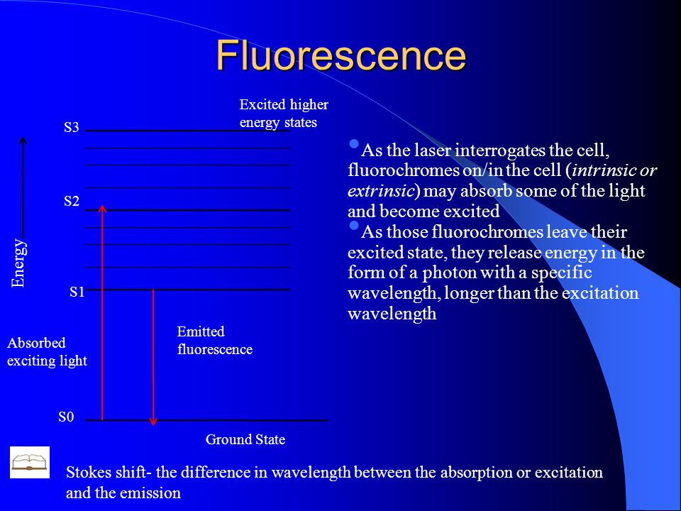 Fluorescence Energy Absorbed exciting light Emitted fluorescence S0 Ground State Excited higher energy states S1 S2 S3 As the laser interrogates the cell, fluorochromes on/in the cell (intrinsic or extrinsic) may absorb some of the light and become excited As those fluorochromes leave their excited state, they release energy in the form of a photon with a specific wavelength, longer than the excitation wavelength Stokes shift- the difference in wavelength between the absorption or excitation and the emission