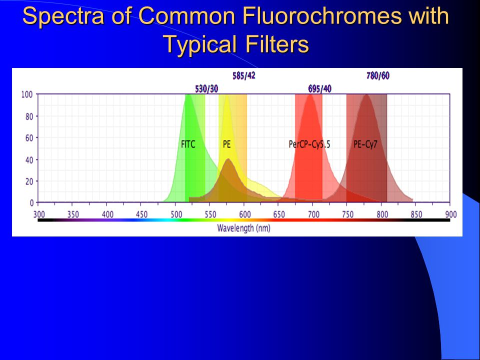 Spectra of Common Fluorochromes with Typical Filters