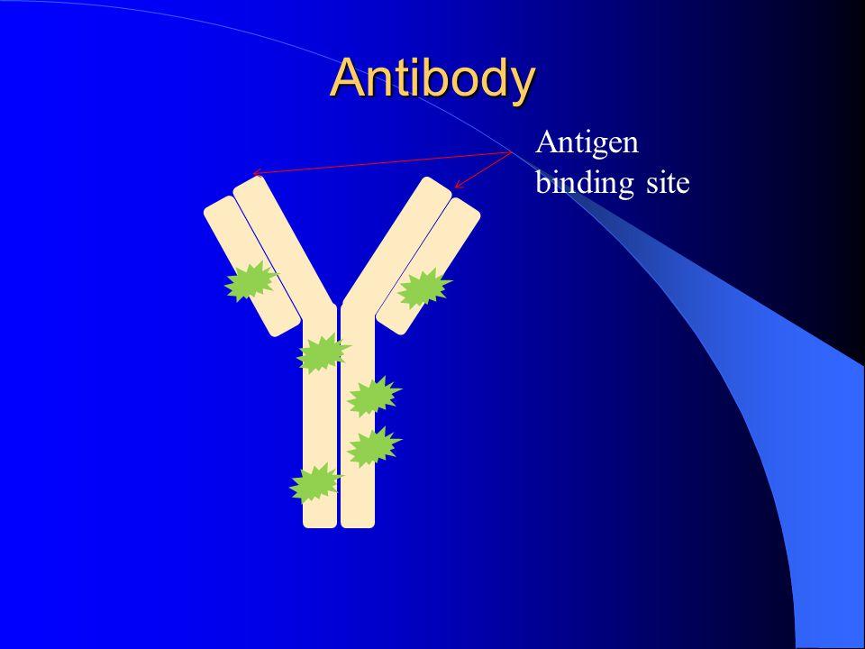 Antibody Antigen binding site