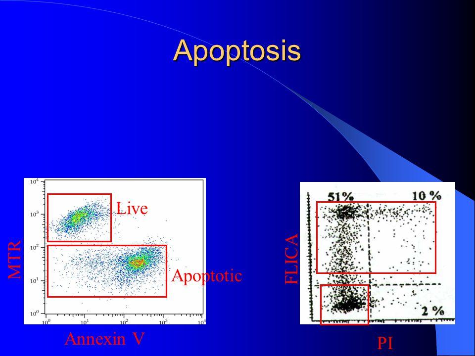 Apoptosis Live Apoptotic Annexin V MTR PI FLICA