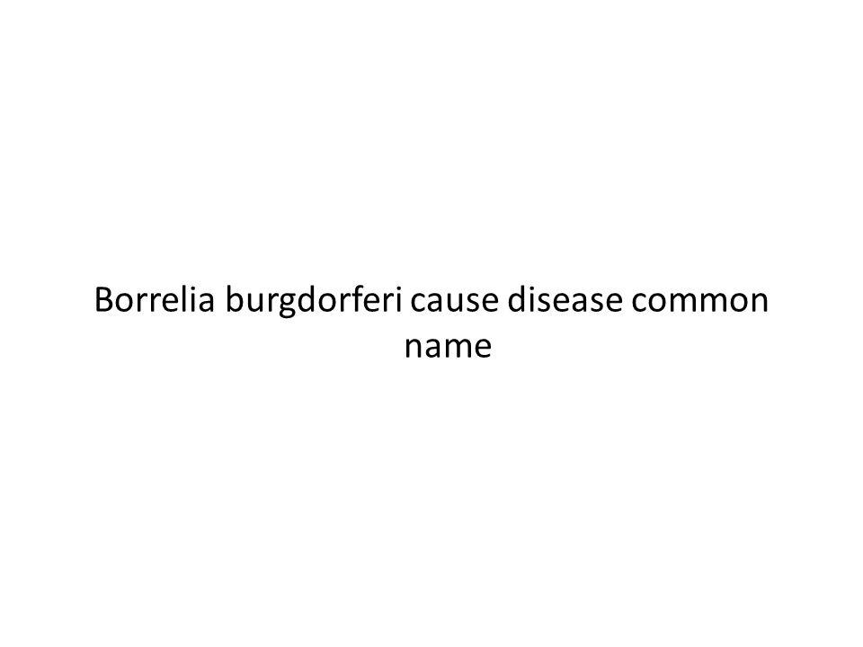 Borrelia burgdorferi cause disease common name