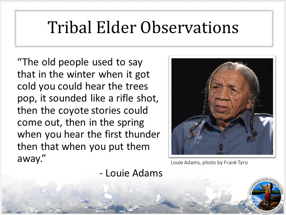 Tribal Elder Observations The old people used to say that in the winter when it got cold you could hear the trees pop, it sounded like a rifle shot, then the coyote stories could come out, then in the spring when you hear the first thunder then that when you put them away. - Louie Adams Louie Adams, photo by Frank Tyro