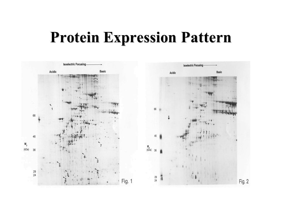 Protein Expression Pattern