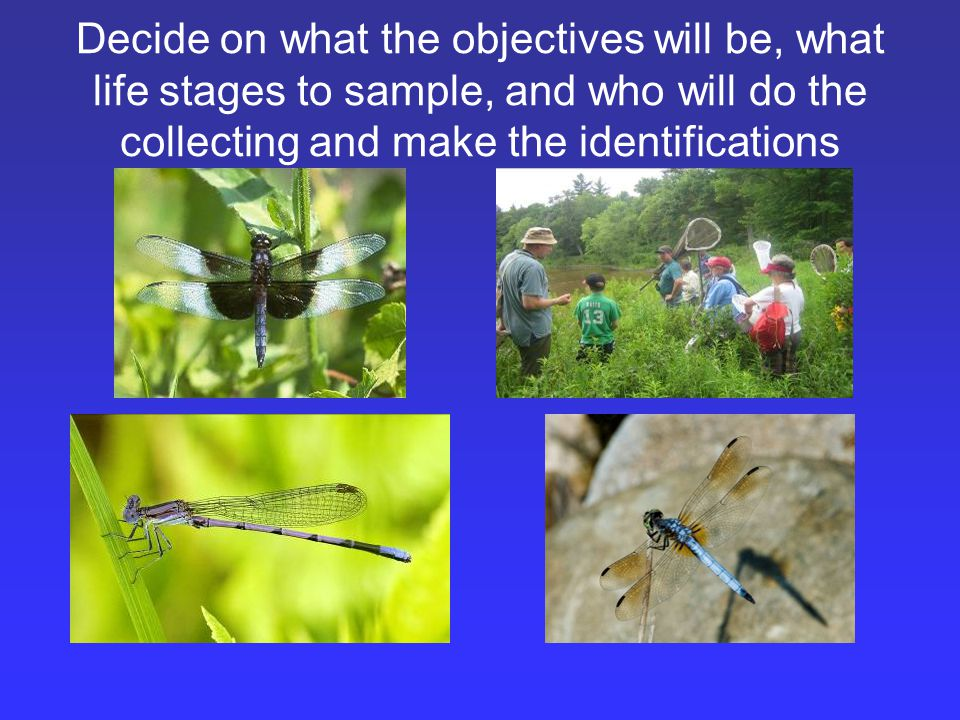 Decide on what the objectives will be, what life stages to sample, and who will do the collecting and make the identifications