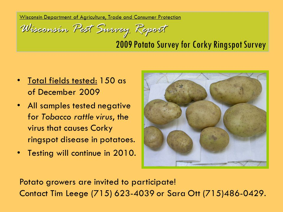 Total fields tested: 150 as of December 2009 All samples tested negative for Tobacco rattle virus, the virus that causes Corky ringspot disease in potatoes.